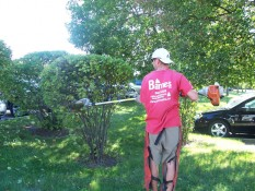 Man Pruning Bushes