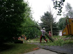 Men Removing Tree