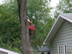 Man Removing Tree Trunk