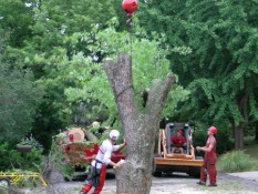 Men Removing Tree Trunk